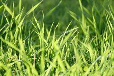 Free Green Grass Stock Photo - 3350510