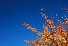 Free Orange And Deep Blue Fall Stock Photography - 3351702