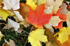 Free Fall Leaves Royalty Free Stock Image - 3351766