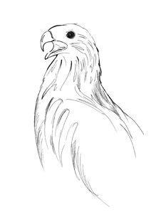 Free Bird Of Prey Royalty Free Stock Photos - 3354598