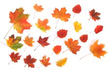 Free Autumn Background Royalty Free Stock Photo - 3355225