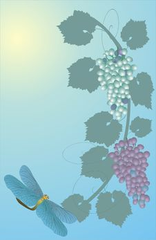 Free Dragonfly And Grapes Royalty Free Stock Photography - 3355437