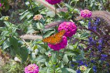 Monarch On Purple Flower Royalty Free Stock Image