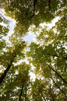 Free Green Forest Royalty Free Stock Photo - 3355525