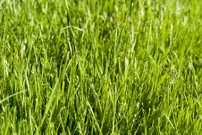 Free Green Lawn Royalty Free Stock Images - 3355699