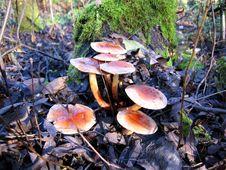 Mushrooms Stock Image