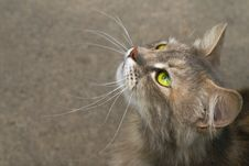 Free Profile Of The Cat Royalty Free Stock Photography - 3356827