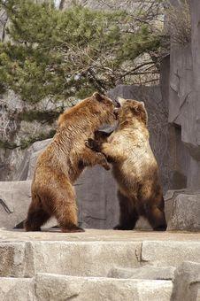 Free Bears 2 Royalty Free Stock Photos - 3357218