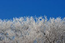 Free Hoar Frost And Blue Sky Royalty Free Stock Image - 3357626