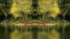 Free Tree Reflections Stock Photography - 3357762