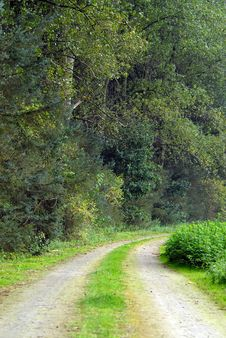 Free Road Through Forest Stock Images - 3357904