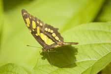 Free Butterfly Macro Stock Photography - 3358162