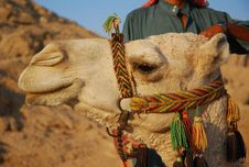 Free Camel Stock Photo - 3358830