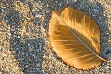 Free Small Autumn Leaf Royalty Free Stock Images - 3359069