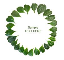 Free Green Leaves Border Stock Photography - 33500482