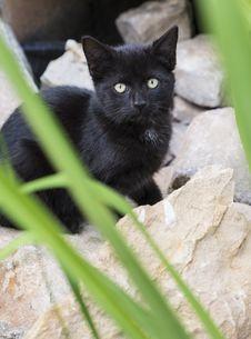 Free Black Kitten Behind Rocks Stock Image - 33514731