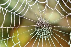 Free Spider Web Royalty Free Stock Images - 33554669