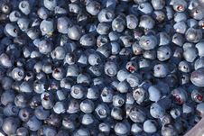 Free Blueberries Royalty Free Stock Photography - 33558977