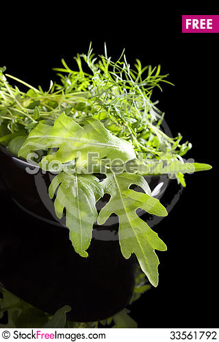 Free Fresh Culinary Herbs. Stock Photography - 33561792