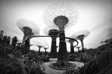 Free Gardens By The Bay Royalty Free Stock Image - 33563596
