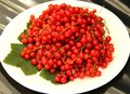 Free Display Of Redcurrants. Stock Image - 33576911