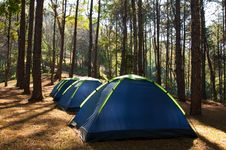 Free Tents In Pine Sitecamp Stock Photography - 33570312