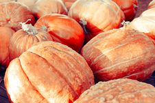 Pumpkins Background Royalty Free Stock Photography