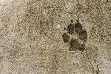 Free Concrete Floor Texture Royalty Free Stock Photo - 33576495
