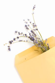 Free Lavender Mail Stock Images - 33581534