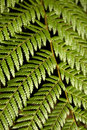 Free Tree Fern Frond Royalty Free Stock Photography - 3367757