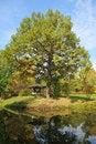 Free Big Oak In Autumn Stock Photos - 3369173