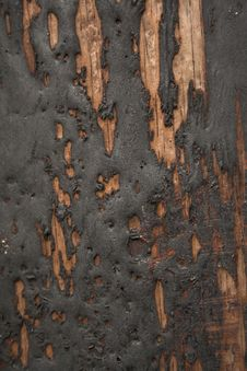 Free Grungy Black Tar On Wood Royalty Free Stock Photography - 3360647