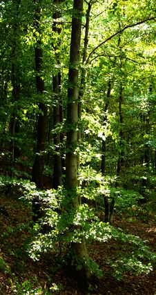 Free Green Forest During Summer Stock Images - 3361984