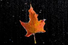 Free Autumn Royalty Free Stock Image - 3365046