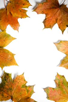 Free Leaves Frame Stock Image - 3365191