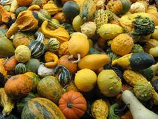 Free Gourd Fest Stock Photography - 3365492