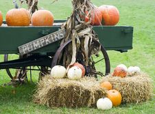 Free Autumn Harvest Display Stock Photography - 3365962