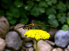 Free Stealth Butterfly Stock Image - 3366091