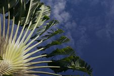 Free Palm Tree Royalty Free Stock Photo - 3366265