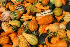 Free Harvest Gourds Royalty Free Stock Image - 3366266