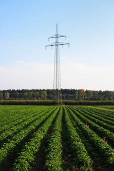 Free Field With Power Pole Royalty Free Stock Images - 3366599
