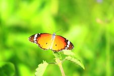 Yellow Butterfly On Meadow Stock Photography