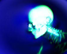Free Human Bones 6 Stock Photography - 3368572