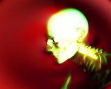 Free Human Bones 7 Stock Photos - 3368573