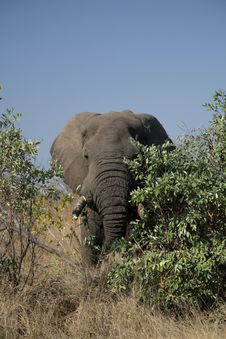 Free Elephant In The Kruger Stock Photos - 3368783