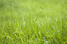Free Green Grass Blades Royalty Free Stock Images - 3368839