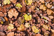 Free Autumn Leaves Stock Photography - 3368922