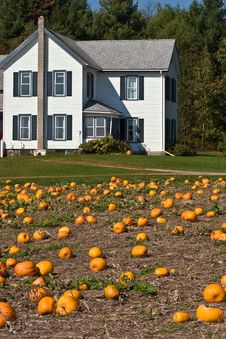 Free Pumpkins Patch Stock Photos - 3369023