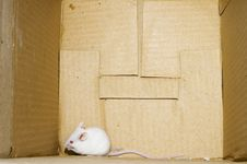 Free White Mice On Box Royalty Free Stock Images - 3369029