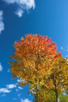 Free Autumn Colors Stock Photos - 3369263